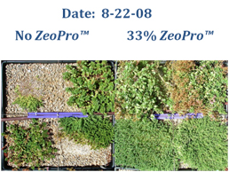 US EPA Region VIII Green Roof Research